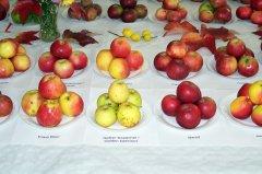 Sortenvielfalt-aus-unseren-Gaerten.jpg