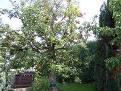 vielsortenbaum_1.jpg